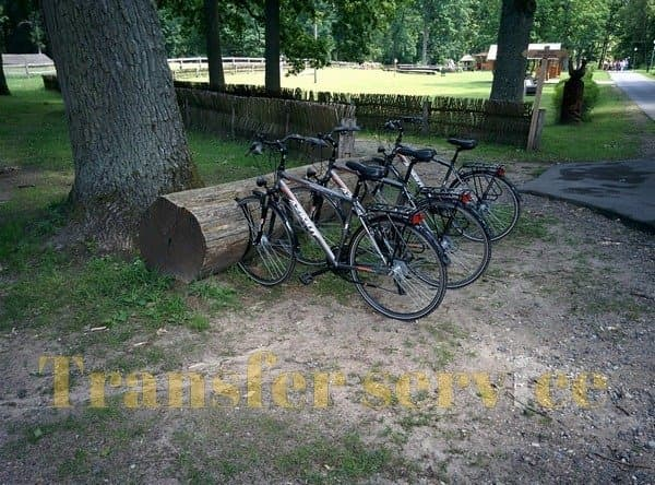 Bicycle rental in Belovezhskaya Pushcha